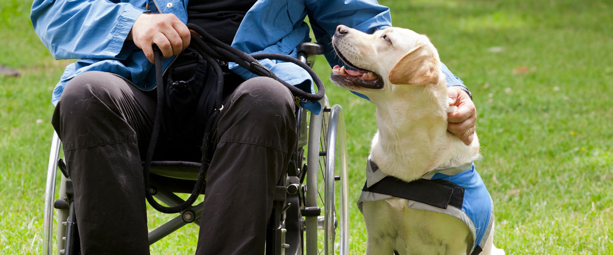 person-in-wheelchair-petting-guide-dog.jpg